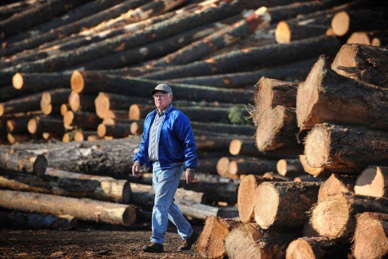 Jim Barnam, owner of the B&J Sawmill in Reed Point, Montana, walks through piles of logs in the sawmill's yard. (AP Photo/Billings Gazette, James Woodcock)